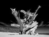 Boneyard Driftwood #2