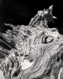 Boneyard Driftwood #4