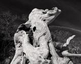 Boneyard Driftwood #6