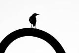 Bird on a Curve