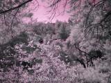 Infrared - False Color
