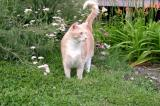 The Catso Surveying His Domain