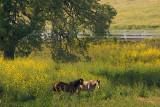 Meadow Ranch