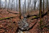 Woodland Stream Fog