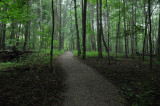 Long Woodland Trail