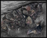 Bats in a Cave