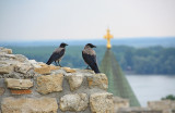 Ravens at the Belgrade Fortress
