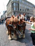 Danish horses