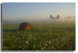 Hay Bales and Foggy Field