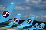 KOREAN TAILS GMP RF.jpg