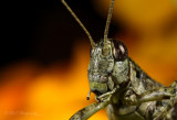 Hopper2 pb.jpg