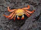 Invertebrates of Galapagos