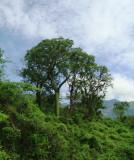 Macara | Jorupe Reserve