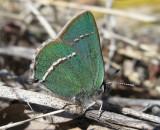 2009_butterflies