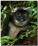 National Zoo Of Nicaragua, Return To Nature