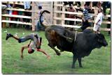 Riding The Bulls