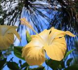Flowers In Uruguay