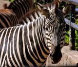 My Zoo Galleries