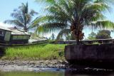 DSC01398 - Coconut palm and abandoned boats