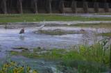 Spillway Water Attracts Birds
