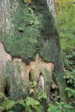 Japan - Hakone Zen Garden