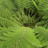 I love Tree Ferns