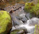 Water and Moss