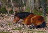 Tired Pony