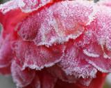 Frozen Beauty 2
