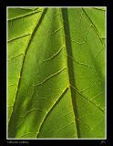 Natural Greens