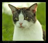 The Green Eyed Monster Cat