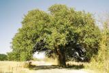 29-Wedding Tree.jpg
