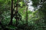 Sept 25&26, 2010 - Makawao Forest Reserve