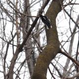 Woodpecker Standoff