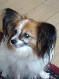 Simba ,she is never quiet,she bark all day long.(maby she is singing?)
