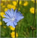 Touch Of Blue By Jill Rex