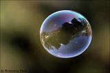 Bubble4th Place