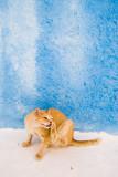Cat on a blue-white backgroundby Wojtas