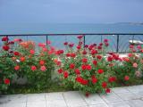 Mediterranean Springby RUcrAZ