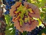 Mosaic Leaf*
