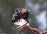 Birds of Norway & Finland