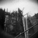 The Old Tree Below Vernal Falls