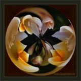 A Circular Spring Bubble