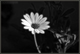 A Black & White With Natural LightAnd, A Dash Of Fractal Spice Tonight