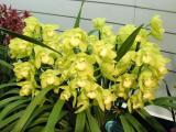 Toronto: Thú Chơi Lan - Orchid hobby