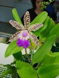 Montreal: Thú Chơi Lan - Orchids for fun