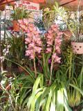 �à Lạt: Chợ Hoa - DaLat Flower Market