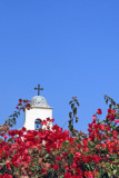Bougainvillea with bell tower in background