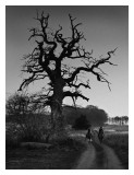 highwaymen  and the gallows tree - Colin