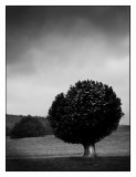 Chatsworth Tree, Alistair